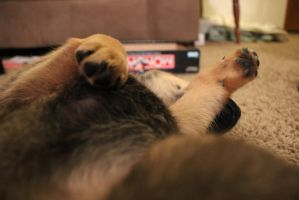Puppy Paws by KateKannibal