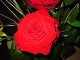 A rose is a rose is a rose... by beekay84