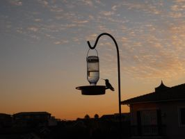 Hummingbird on Feeder by Llyzabeth
