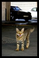 Cat by AbdoHad