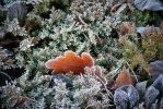 Frost leaves X by nawichok