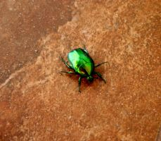 Green Dung Beetle by Domino310