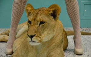 Lion among my legs by PhotoNovotna