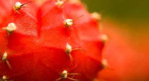 Pink Cactus by TwistedLabel