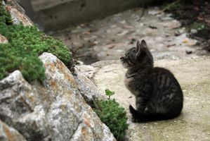 Cat by Solco90