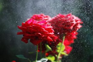 Raindrops are like fairy whispers by BlueColoursOfNature