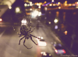 City Spider by SnowWhitesAngel
