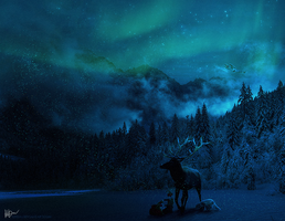Northern Lights by Gejda