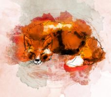 Fox by thexsoliloquist