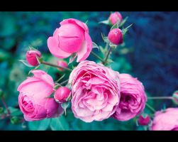 In The Garden by SarahJPhotography