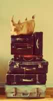 Suitcases and Mr.Rhino by petrosptrs