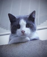 Judgmental cat is judging you. by Silver786