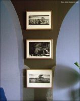Joshua Tree Framed Pictures 2 by fionaadam