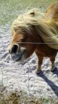 A walk in the windy wildlife park - Horse hair by PH3NF1X