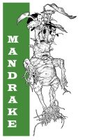 HARRY POTTER: MANDRAKE by Jerome-K-Moore
