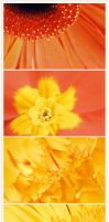 spring flowers by ia