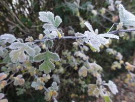 Frozen Leaves 04 :: Stock by Selunia