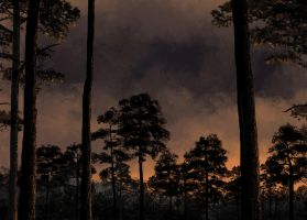 Pines by AncientKing