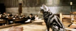 McGonagall cat by imnotanalien