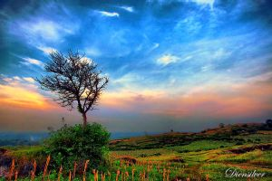 Dry tree on the hill by diensilver