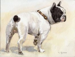 French Bulldog by sschukina