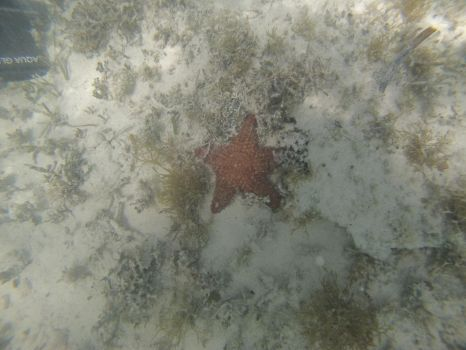 Majestic Seastar by quadallae