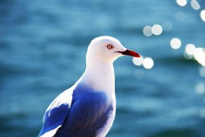 Seagull by kaitlynslocombe
