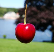Cherry in the Sun by KayleiImagery
