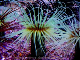 Fluorescence grass coral by sirena-pirey