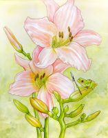 Frog and Lilies by ursulav