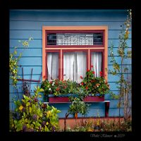 Bianca's Window by Violet-Kleinert