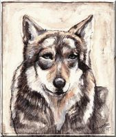 Portrait of a wolf by MademoiselleOrtie