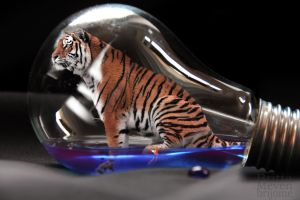 Tiger in the bulb5 by brijome