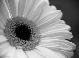 Black and white... 8 by AgataSwat
