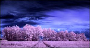 Pink Forrest Pano... by MichiLauke