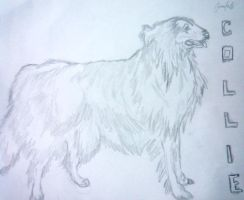 COllie a breed of dog by jubantaicho