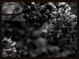 dead flowers by thelastring