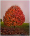 solitary autumn tree. by toolophile