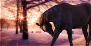 Fog of War Horse Picture 3 by Spallyz