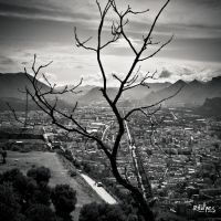 A dead tree above the city by rdalpes