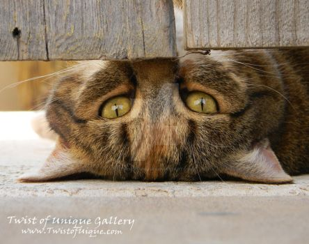 Eyes under the gate by TwistOfUnique
