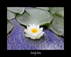 lonely lotus by brat07