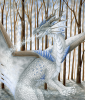 Joy of winter by Dragarta