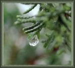winter water droplets by Sophie-Y