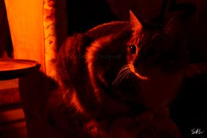 In the Red Light by Momenti-Photo