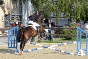 Young Horse Jumping a Cross Big Leap by LuDa-Stock