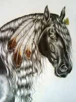 Indian horse by youngmoons