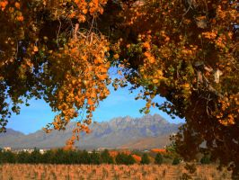 Autumn and the Organ Mountains by SharPhotography