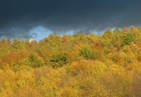 I don't know..autumn gold? by stefanpriscu
