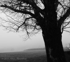 A walk in the fog I by SilvieTepes